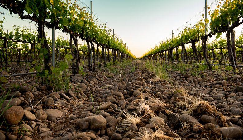 Oregon Wine Press: Rock Solid
