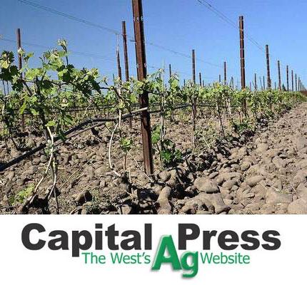 Oregon's newest AVA attracting development