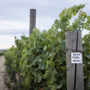 Barrett Station Vineyard
