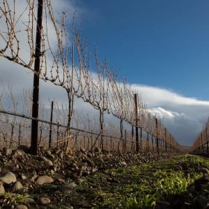 Funk Estate Vineyard